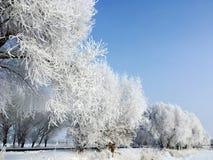 雪树在冬天 免版税库存照片