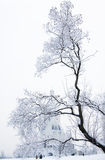 雪树 免版税库存图片