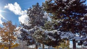 雪树 免版税库存照片