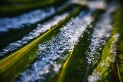 雪棕榈 库存照片