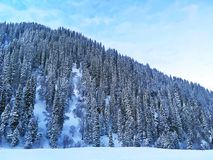 雪森林在冬天 库存照片