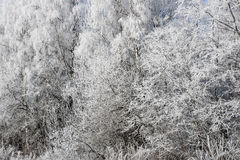 雪森林背景 库存照片