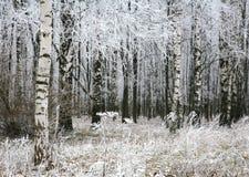 雪植物在秋天森林里 库存图片