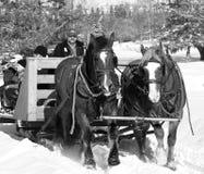 雪橇马和雪橇在冬天 免版税库存图片