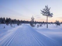 滑雪沼泽足迹中部在日落以后的 库存图片