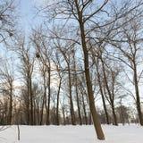 雪漂泊在冬天 免版税库存照片