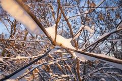 雪漂泊在冬天 库存照片