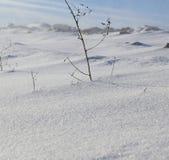 雪漂泊在冬天 图库摄影