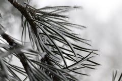 雪漂泊在冬天 免版税图库摄影