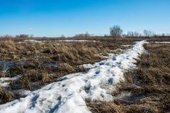 雪熔化,并且积累融解水形成沼泽 免版税库存照片