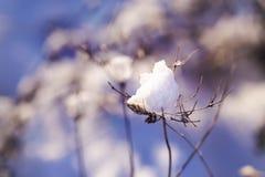 雪片断在一根干枝杈的在冬天 库存图片