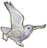 斯诺伊猫头鹰 库存图片