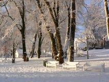 雪白冬天 库存照片