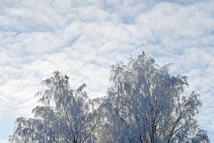 雪白色树梢和多云天空 免版税库存图片