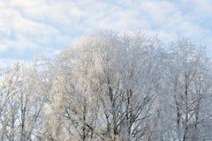 雪白色树梢 免版税库存图片