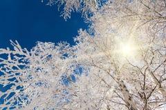 雪白结霜的树 免版税库存照片