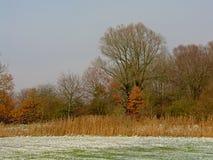 雪的冬天沼泽在富兰德 免版税库存照片