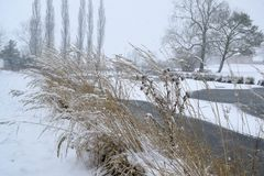 雪的冻池塘 库存图片
