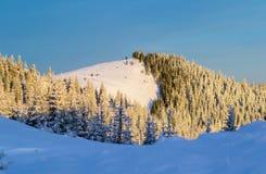 雪的山森林 库存照片
