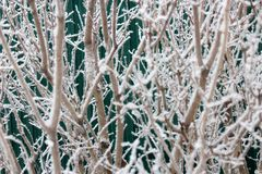 雪的布什在冬景花园 免版税库存图片