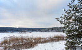 雪的斯诺伊池塘 免版税库存图片