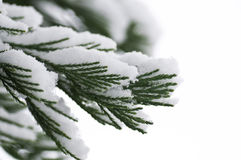 雪的森林 免版税库存照片