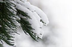 雪的森林 免版税图库摄影