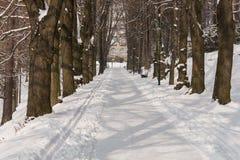雪的神仙的冬天森林 花雪时间冬天 重的冬天雪秋天 在雪的冬天结构树 与锡的美好的冬天风景 库存照片
