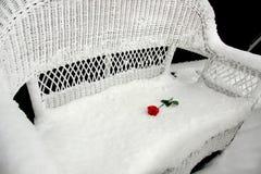 雪的罗斯 免版税库存照片