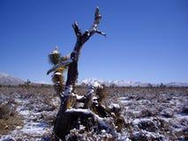 雪的莫哈维沙漠 免版税库存图片