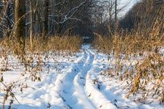 滑雪的足迹在森林里 免版税库存图片