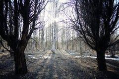 雪的风景在森林里 免版税库存图片