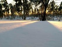 雪盖在树下 库存照片