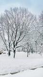 雪盖帽树在中央公园纽约 免版税库存照片