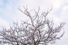 雪盖的树早午餐在英国冬天1 免版税库存照片