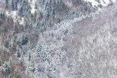 雪盖的树鸟瞰图在森林里,在Subasio山翁布里亚一边,创造一摘要 免版税图库摄影