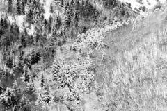 雪盖的树鸟瞰图在森林里,在Subasio山翁布里亚一边,创造一摘要 免版税库存图片
