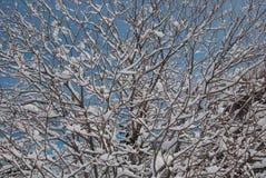 雪盖的树 免版税库存图片