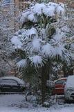 雪盖的棕榈树在12月 在城市街道、房子和汽车的大雪 免版税库存图片