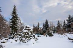 雪盖的美丽的冬景花园 免版税库存图片