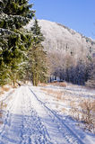 雪盖的路在森林里 免版税库存图片