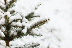 雪盖的绿色树枝具球果 黑色蓝色人行道照片风景定了调子空白冬天森林 库存图片