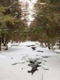 雪秋天在森林里 免版税库存照片