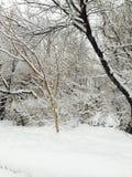 雪秋天美好的风景 免版税图库摄影