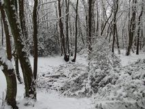 雪秋天 免版税库存图片