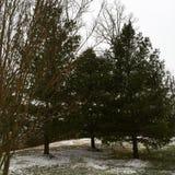 雪秋天 库存照片