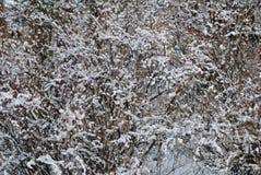 雪纹理 库存照片