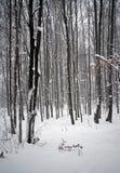 雪结构树冬天 图库摄影