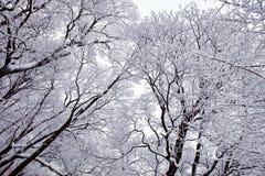 雪结构树冬天 免版税库存图片