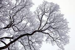 雪结构树冬天 库存照片